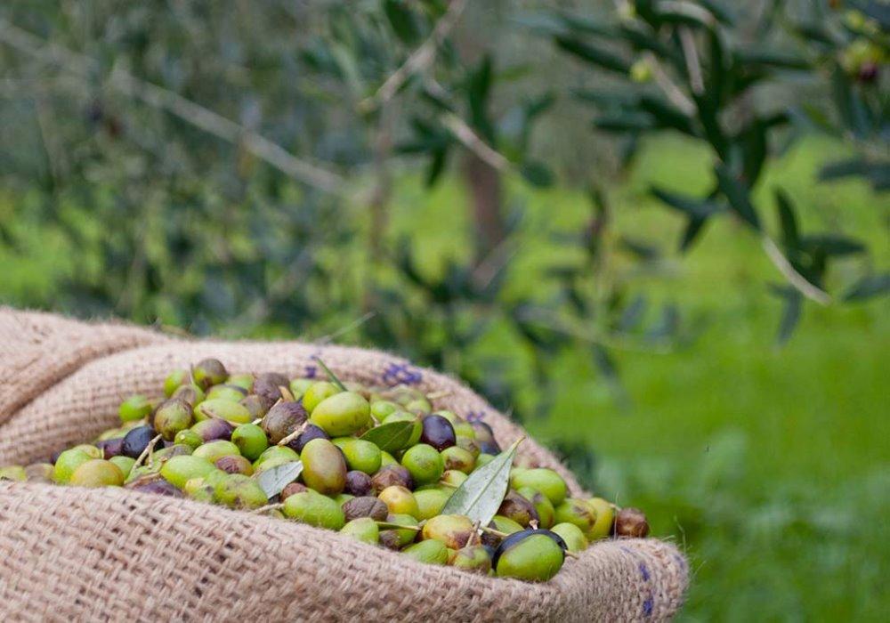 6 CURIOSITÀ SULL'OLIO DI OLIVA 6 cose che forse non sapevate sull'olio di oliva
