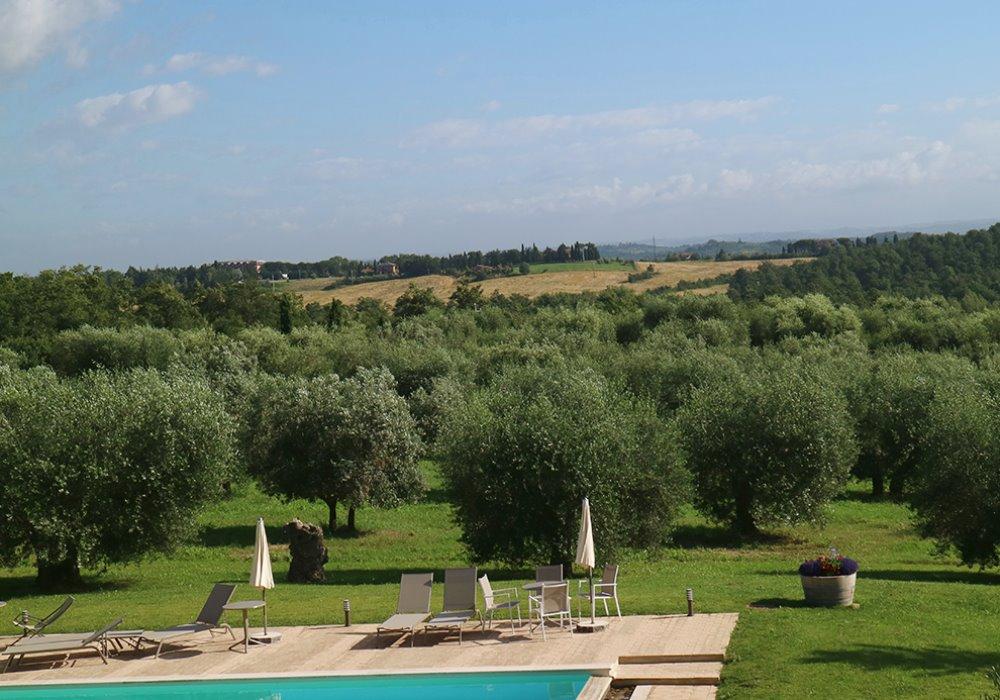 L'ODORE DI UN OLIO DI QUALITÀ   Come riconoscere l'olio di oliva